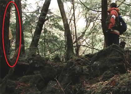 映画『青木ヶ原』に心霊シーン 編集時に気付かずそのまま公開へ