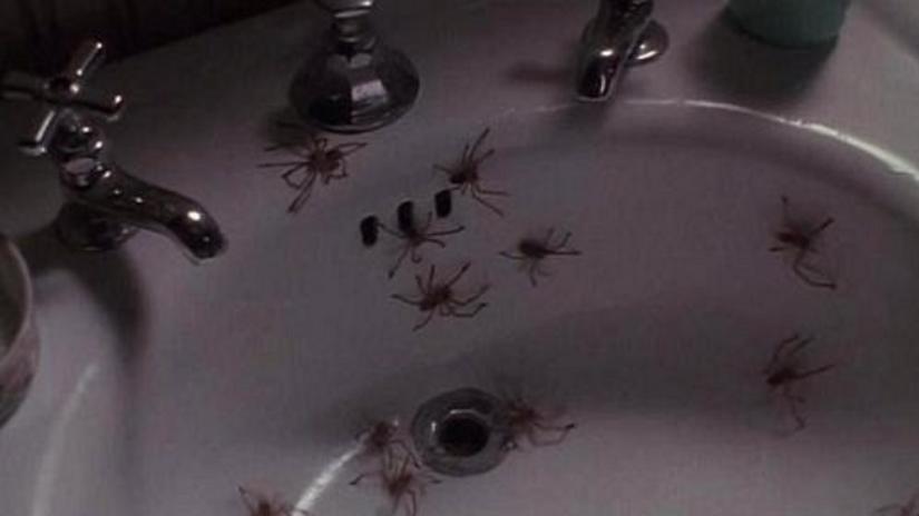 南アフリカの熱帯雨林で発見された猛毒を持った蜘蛛が原因で、次々と人々が死を遂げていく。