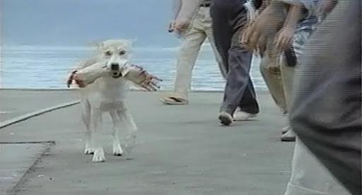 腕をくわえた犬
