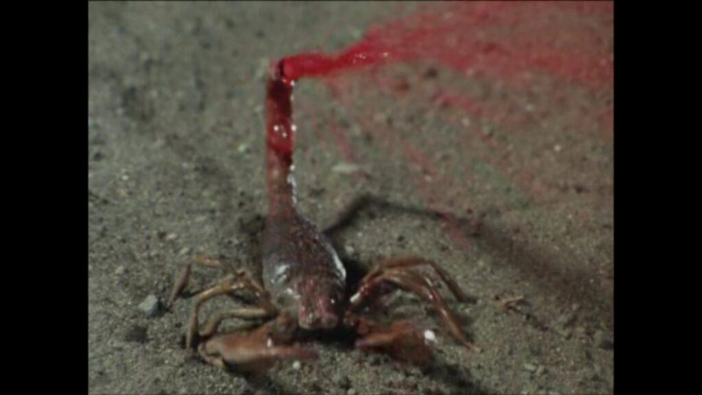 さそり男(さそり人間)は、尾から人体を溶かす毒液を噴射する人喰いサソリを操る。