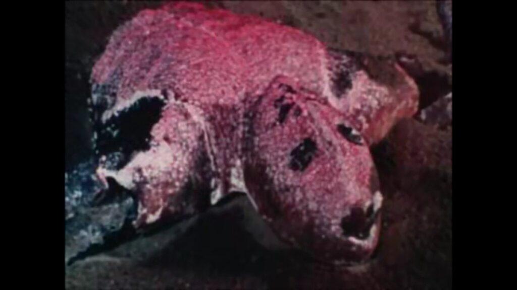 本郷に敗れた早瀬五郎・さそり男の壮絶な最期。完全にホラー映画レベルの人体破壊描写。最後はライダーシザースで岩に叩きつけられ、赤い液体となって消滅する。