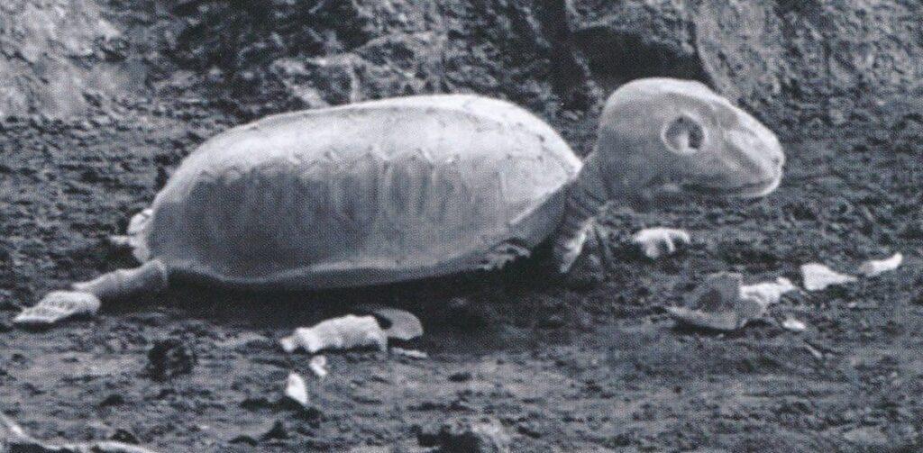 『モスラ対ゴジラ』に登場する「インファント島の怪骨」は、見た目は死骸なのだが、何故か首が動き、まばたきまでしている。